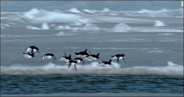 flying-penguins.jpg