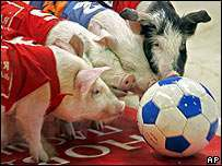 football-pig