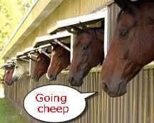 horse-heads.jpg