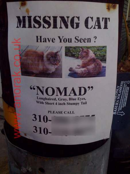 missing-cat-nomad