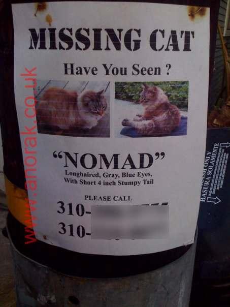 missing-cat-nomad