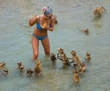 paris-hilton-monkeys