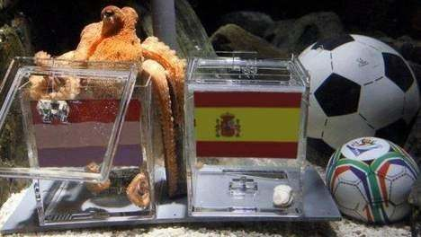 Spain vs Netherlands: Paul the Octopus predicts Spanish win