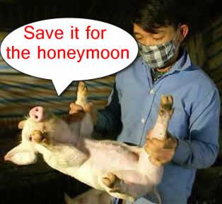 pig-flu