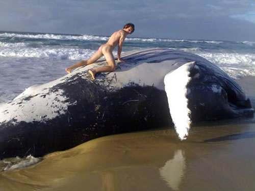 фото как ебутся киты