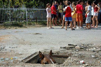 sewerhorse.jpg