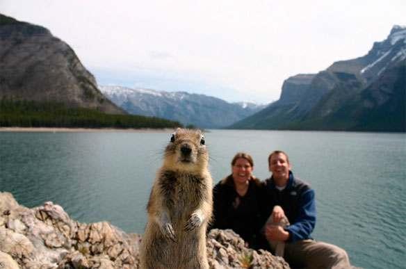 squirrel-brandts