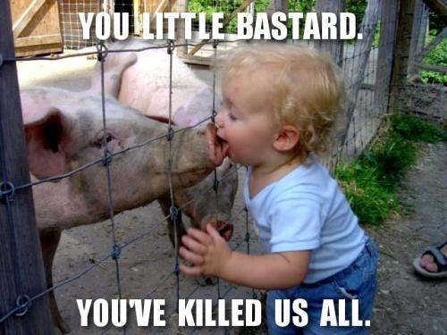swine-flu-source