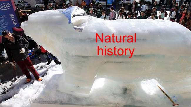 sydney bear Polar Bear Made From Ice Proves Global Warming Is Natural