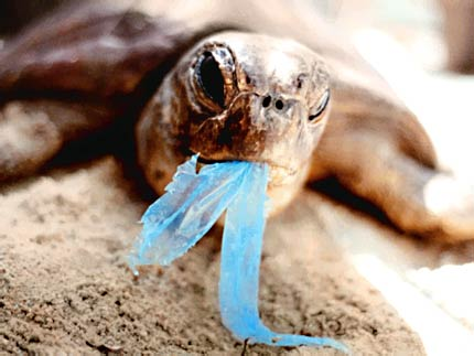 turtle-plastic-bag.jpg