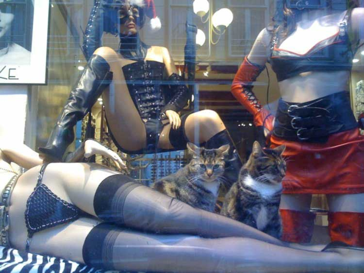 window-display