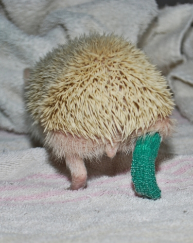 animals-with-casts-14