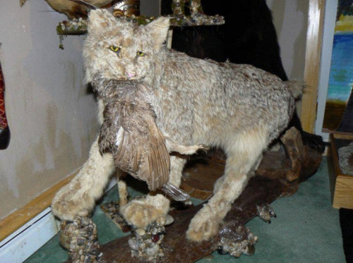 taxidermy-1