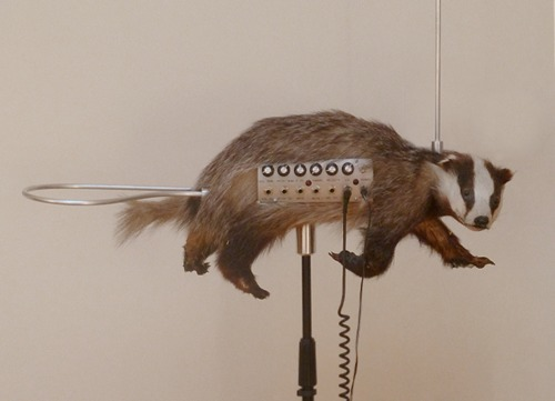 taxidermy-10