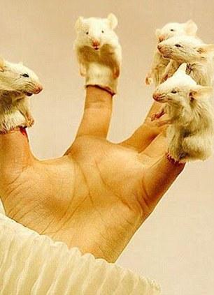 taxidermy-micee