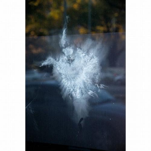 birds_crash_into_windows_11