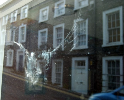 birds_crash_into_windows_12