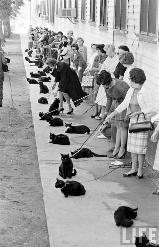black-cat-auditions-1