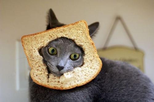 breading-1