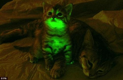 glow-in-dark-cats-1