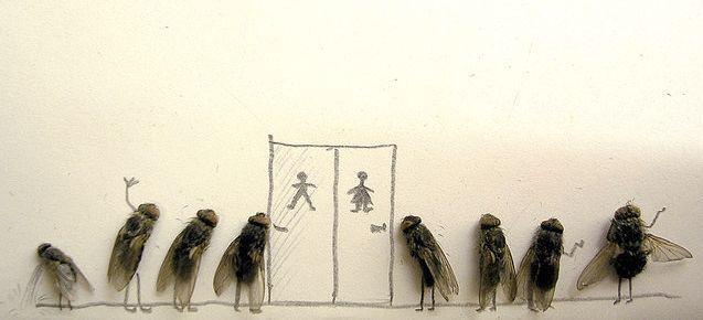 dead-flies-as-art-1
