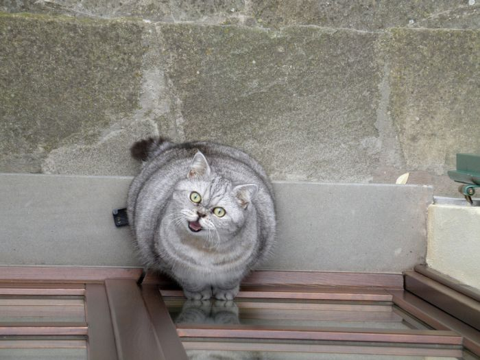fat-cat-giuly-12