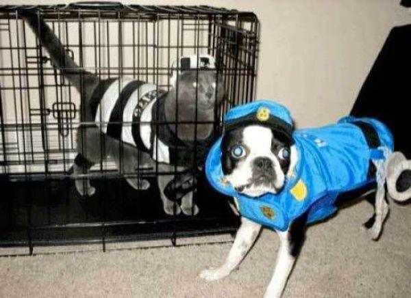 halloween-dogs-1