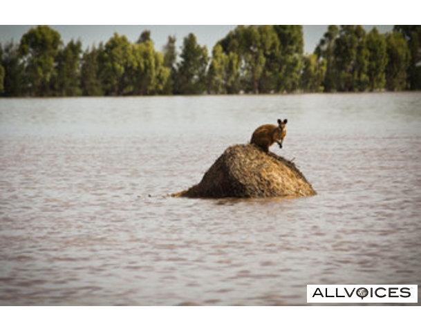 australia-flood-2