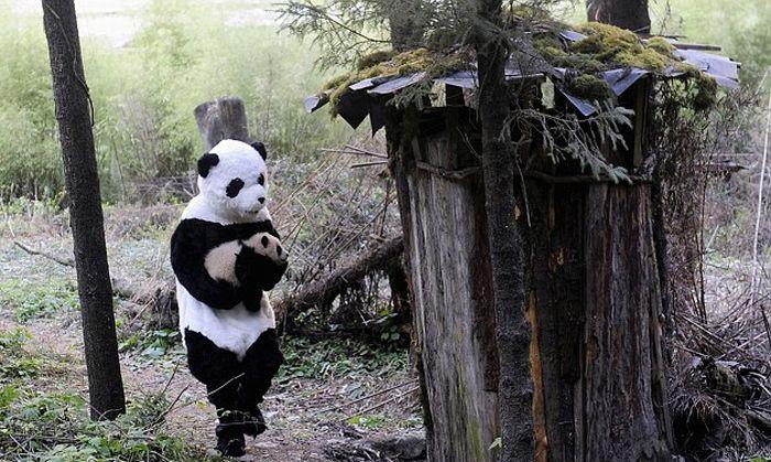 panda-cub