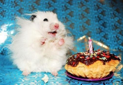 pet-birthdays-80