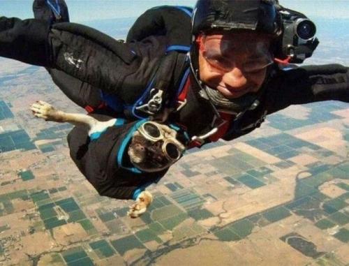 sky-dog