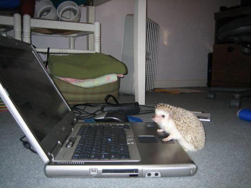 web-hog