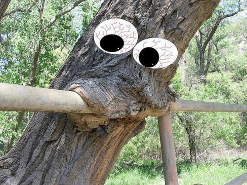 chew-tree
