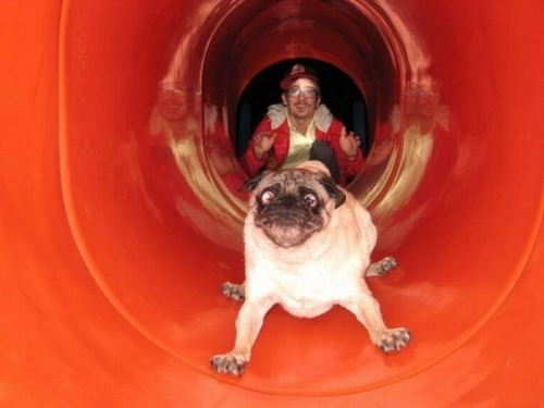dogs-tube