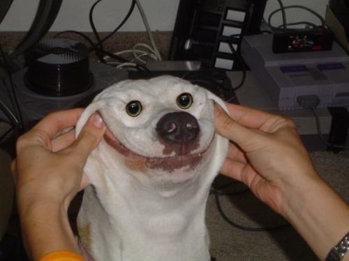 happy-dog-573-large