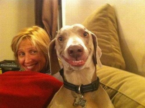 smile-dog
