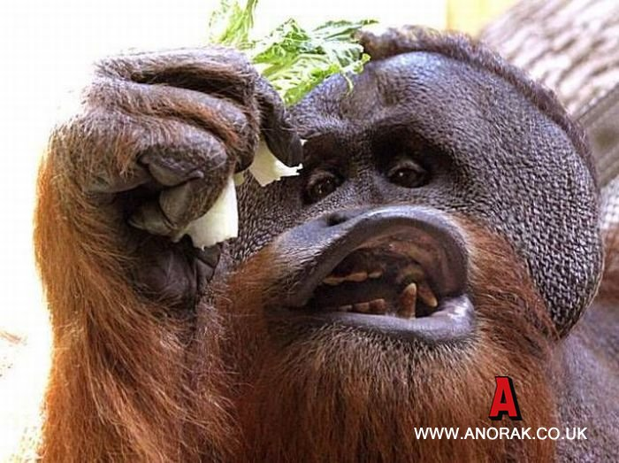 monkey-cheese