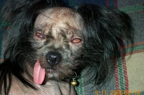 ugly-dog-26