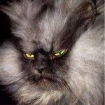 Colonel Meow is the internet's angriest cat – 13 photos