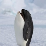 Killer Penguins: New Animal Species Found On The Internet