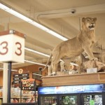 Hanks Grocery Store In Twisp, Washington Is Number One For Stuffed Animals