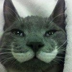 Meowvember: The Best Cats With Moustaches