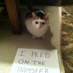 Cat Shaming: Humans Try To Make Cats Look Less Spiteful And Cruel