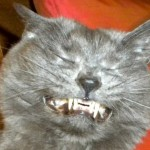 Cats Sneezing – 10 Photos of Cats Mid-Sneeze