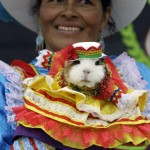 Peru's Guinea Pig Festival In Photos: Playing With Your Food