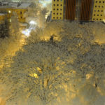 Hundreds and hundreds of starlings photographed sat on snow-covered trees in Portland, Oregon