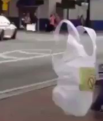 plastic bag crosses road