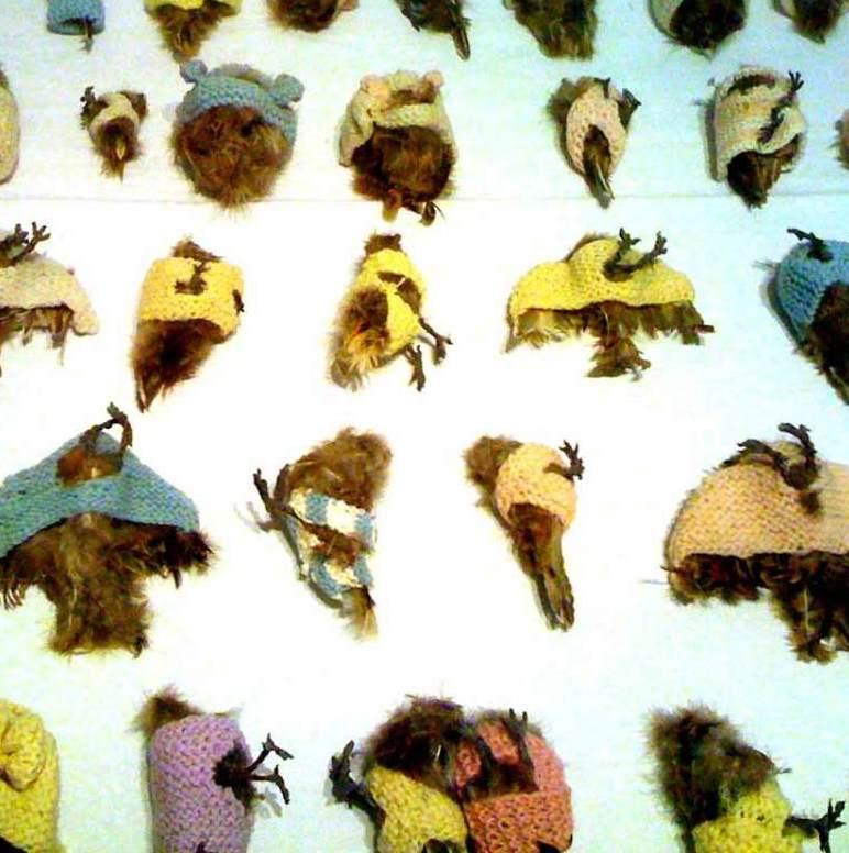 Annette Messager sparrows
