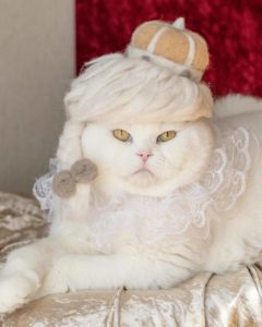 cat hats hair