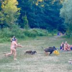 Photos: Naked man chases wild boar who stole his laptop in Berlin park